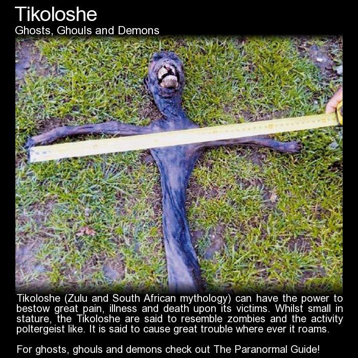 Tikoloshe. AKA Tokoloshe, this is a mischievous creature that can cause great harm. http://www.theparanormalguide.com/blog/tikoloshe