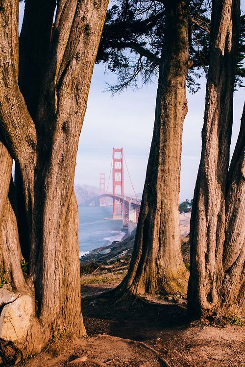 San Fran, old trees and the gate