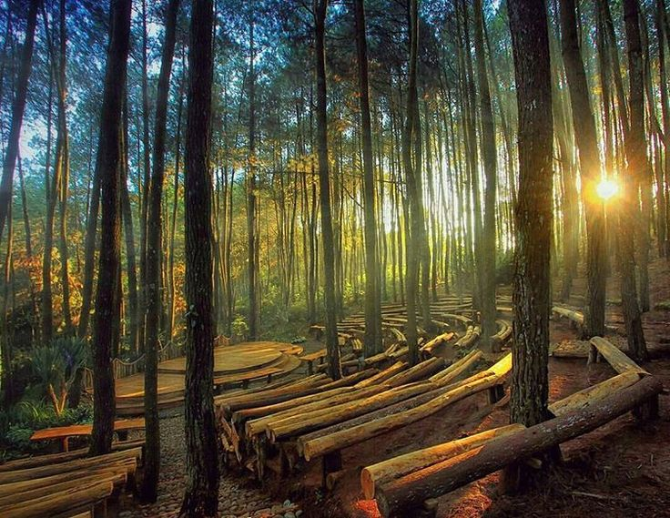 panggung pertunjukan hutan pinus imogiri