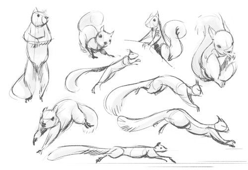 niedliche Eichhörnchen 2                                                                                                                                                      Mehr