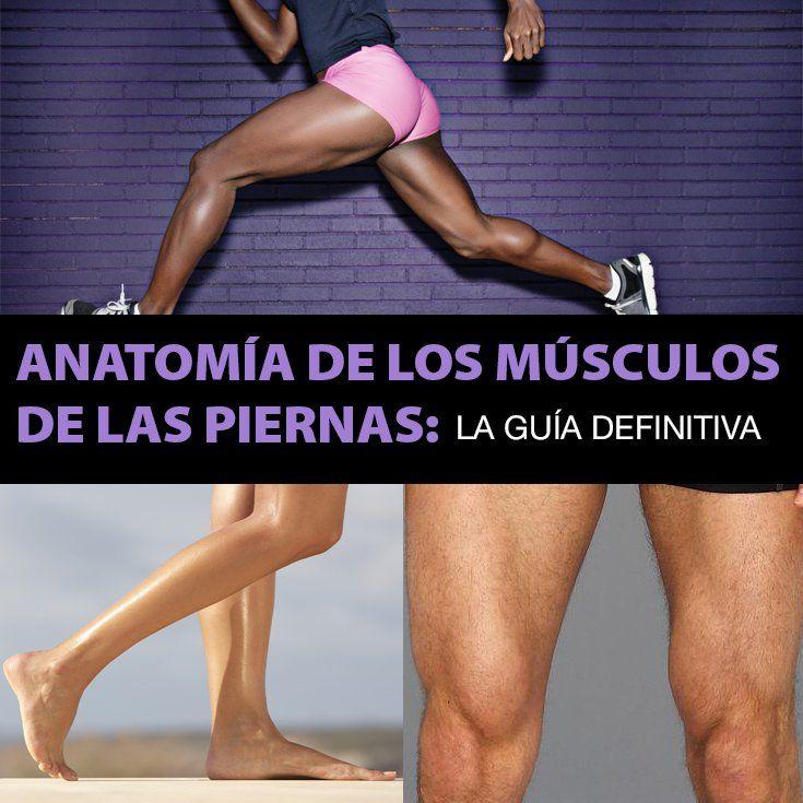 músculo de la pierna trasera llamado