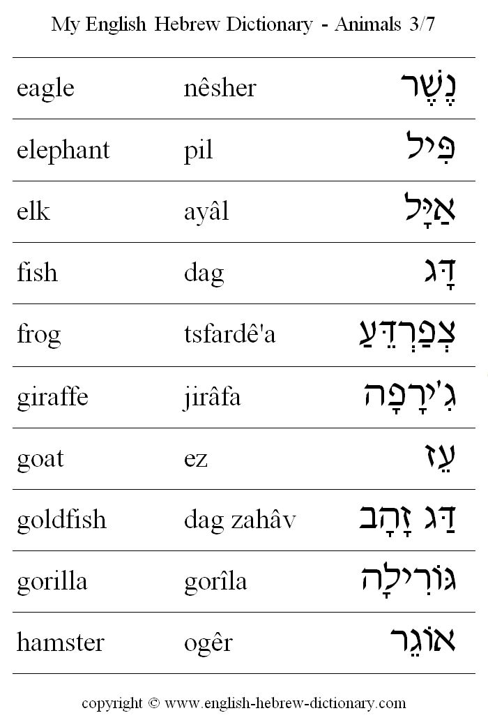 English to Hebrew: Animals Vocabulary: eagle, elephant, elk, fish, frog, giraffe, goat, goldfish, gorilla, hamster