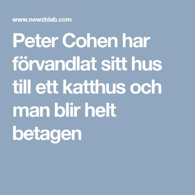 Peter Cohen har förvandlat sitt hus till ett katthus och man blir helt betagen