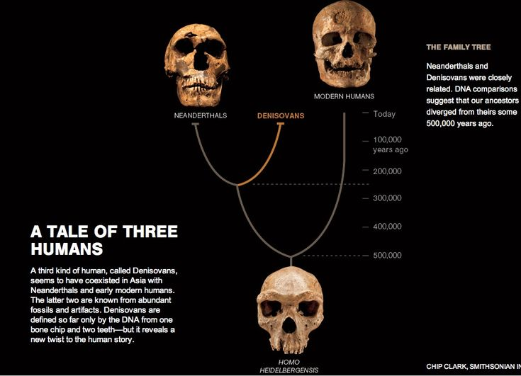 neanderthal and human relationship