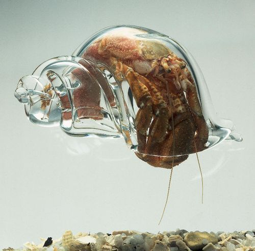 hermit crabs will use whatever shell they can find, including this blown glass shell by robert dugrenier.