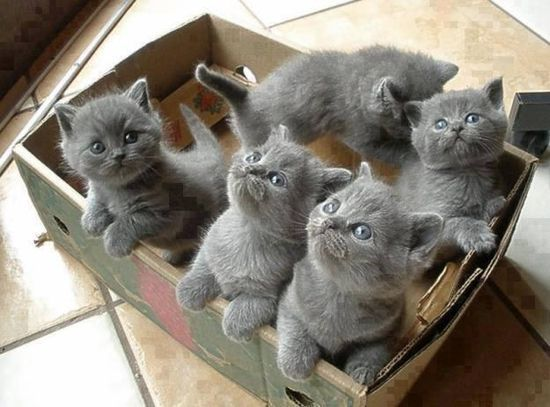 "New at Erwin Schrödinger cat in a box delivery service. Our party pack of Evil!!! ""Level of Evil!!! and damage it may do when you opening the box is in no way affiliated with Erwin Schrödinger cat in a box delivery service"" We just don't deliver a box, we deliver pure....Evil!!!"