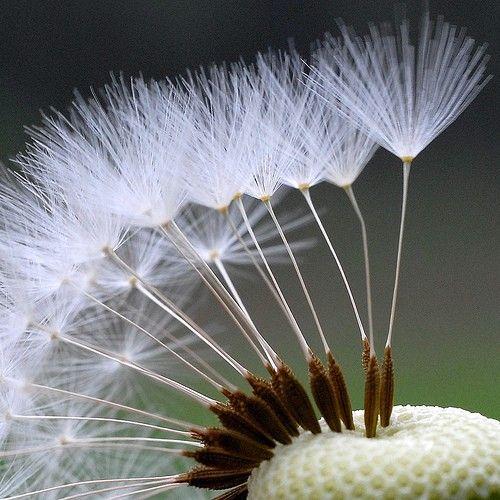 .seeds