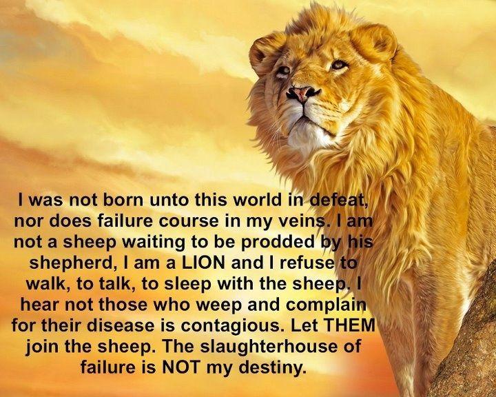 lion determination quotes - Google Search