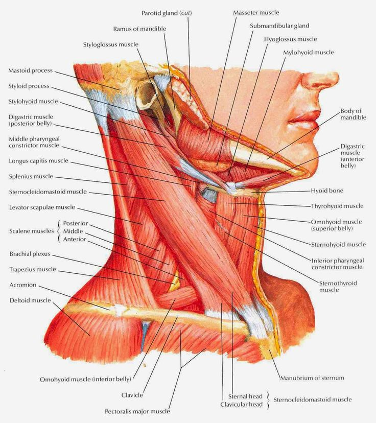 12 best NaWi images on Pinterest | Anatomy, Breastfeeding and ...