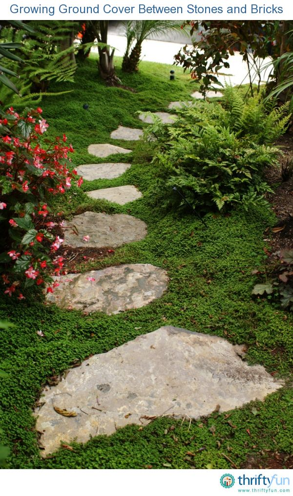 Landscape Stone Ground Cover : Best images about shady ground cover on pinterest