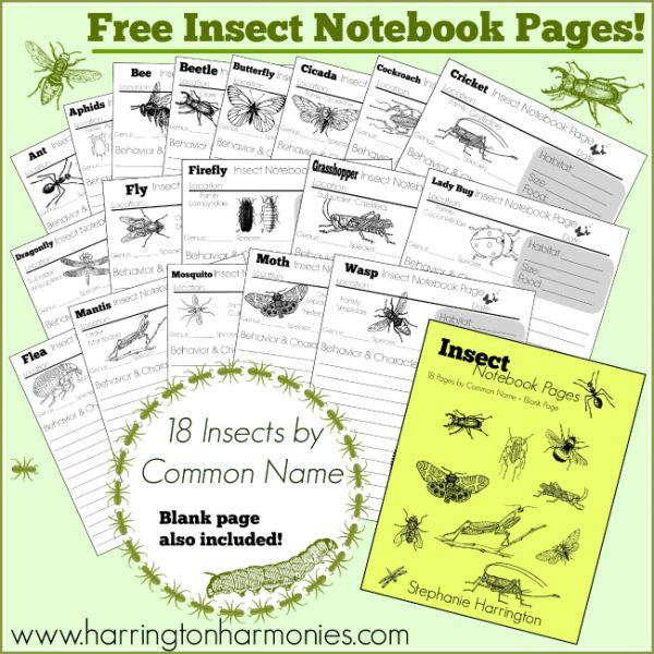 Free Insect Notebook Pages: Great supplement for Apologia's Zoology 1!