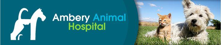 Ambery Animal Hospital - Veterinarian In Atlanta, GA USA :: Veterinary Orthopedic Manipulation (VOM)