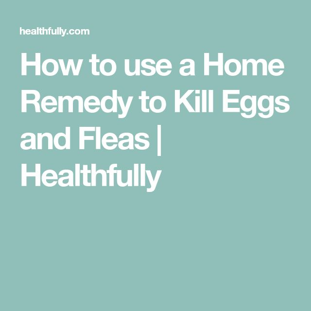 How to use a Home Remedy to Kill Eggs and Fleas | Healthfully