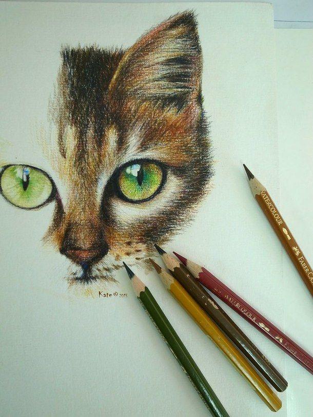 pencil, art, cat, drawing, colored