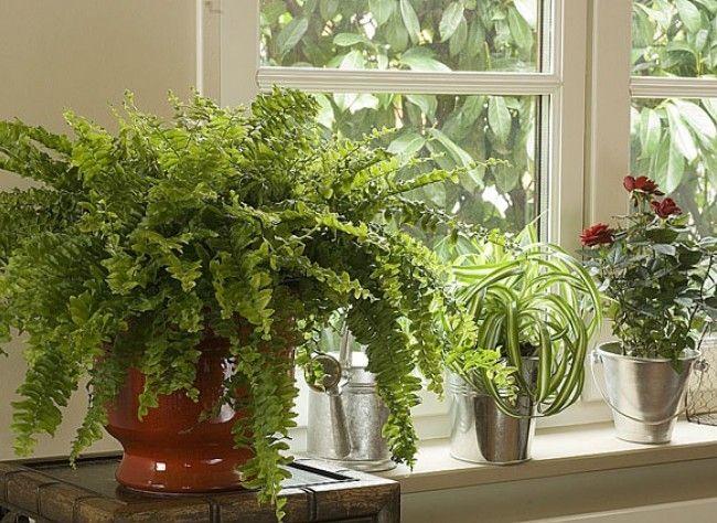 www.rustica.fr- 24 Houseplants That Clean the Air - 24 plantes dépolluantes* qui améliorent votre maison