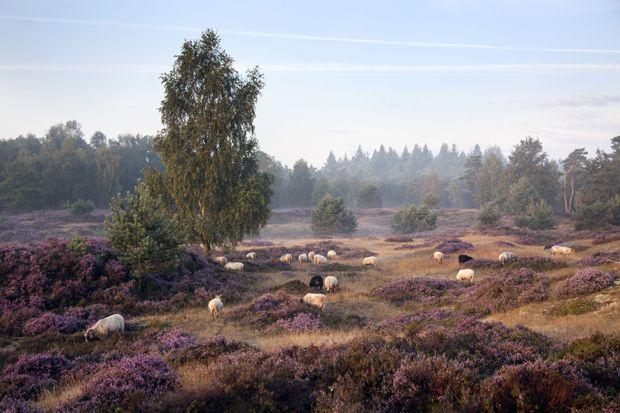 Deutschland: Lüneburger Heide: Kurztrip mit Genuss - BRIGITTE