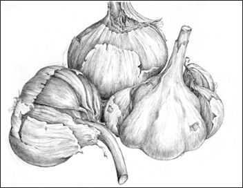 pencil drawings of fruit and vegetables - Google Search