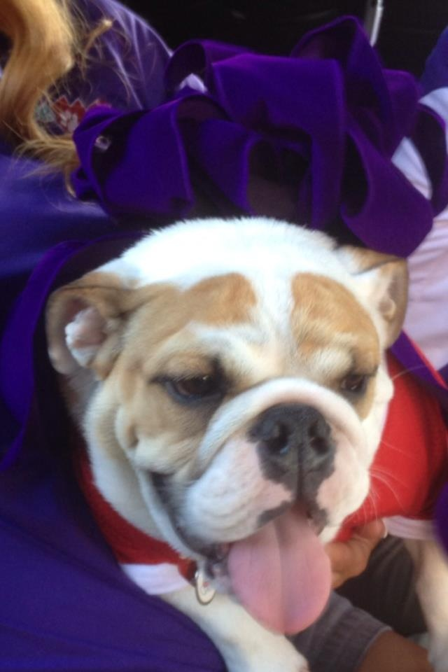 Introducing Victor E. Bulldog II... Welcome to the Fresno State family!
