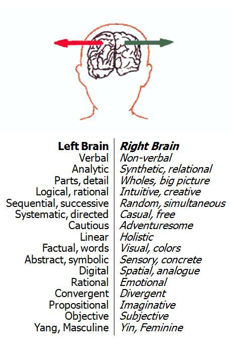 the brain left vs right essay Free essay: the brain has its own functions and is divided into two hemispheres:  the left hemisphere and the right hemisphere also, has its own way of.