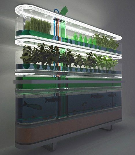 The Biosphere Farm by Philips houses fish, root vegetables, grasses, herbs, plants and algae under a common roof