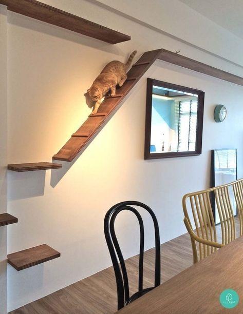Encontre idéias práticas e variadas para a parede de escalada de gatos!   – Katze