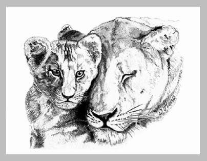 Lioness  cub by Night-Sam.deviantart.com on @deviantART