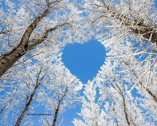 Winter heart @Globe_ Pics on Twitter