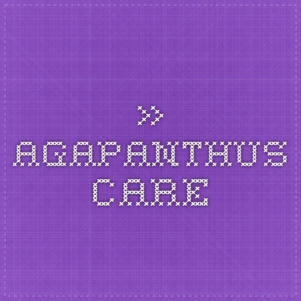 » Agapanthus Care