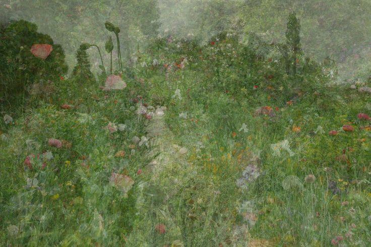 Untitled (flowers), 2013 © Kim Boske/Aando Fine Art - Read more: http://www.unseenamsterdam.com/unseen-collection-sneak-peek-kim-boske #Unseen2013
