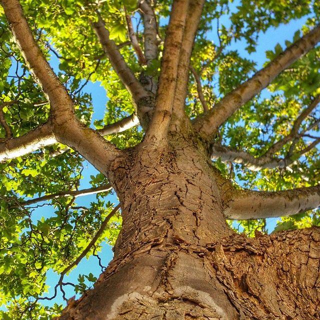 #unselfie #day175 #tree #alki #alkibeach #westseattle #seattle