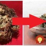 Prinesie vám do domu šťastie a bohatstvo: Dajte si do bytu túto rastlinu a položte ju do misky, toto dokáže!