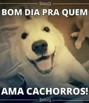 BOM DIA PRA QUEM AMA TODOS OS ANIMAIS!!! ❤️❤️❤️ #petmeupet #amoanimais #cachorro #gato #filhode4patas #maedepet