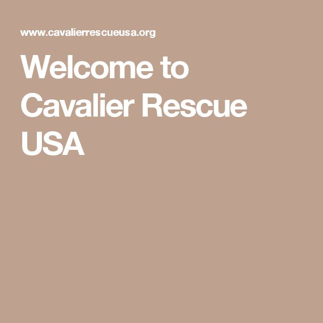 Welcome to Cavalier Rescue USA