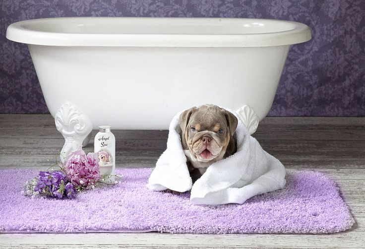 Lisa Jane Painting - Dog With Towel 2 by Lisa Jane