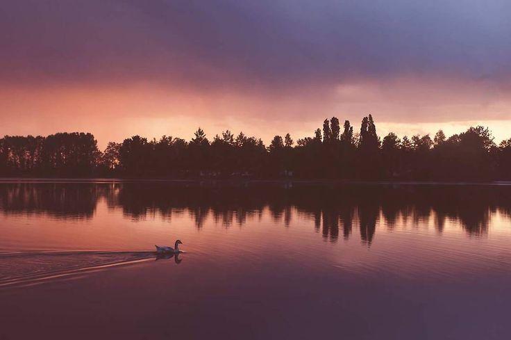 Sunset part 2  #nature #amazing #beautiful #love #sunset #twilight #tbt #tramonto #crepuscolo #lake #animals #iphonesia #nikon #photooftheday #evening #happy #friends #photography #relax #work #milano #gaggiano #trees