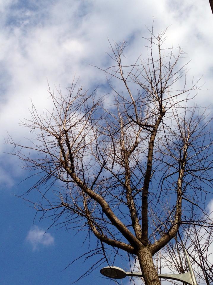 3월1일  서울 하늘