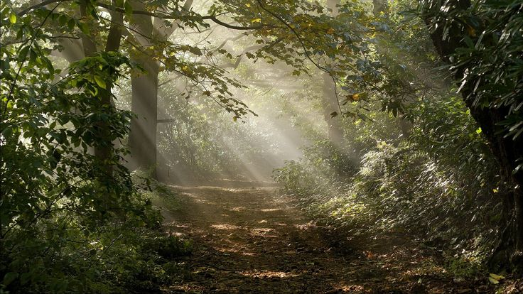 forest desktop background pictures free