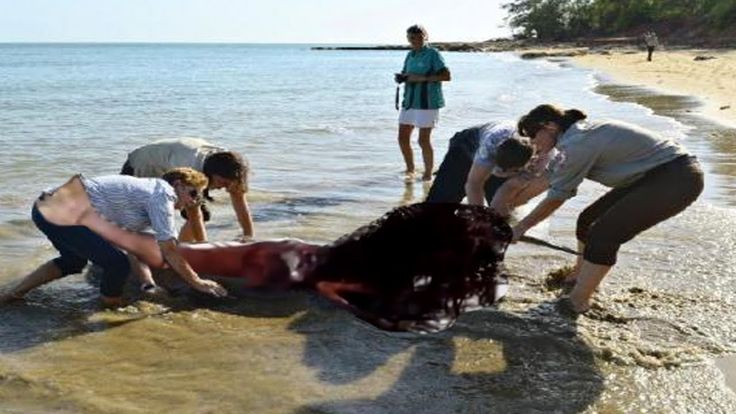 Real Mermaid Found After Hurricane 2016