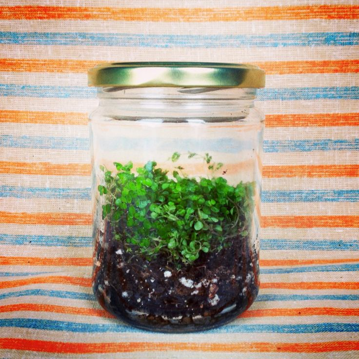 Easy step by step terrarium project for kids   Garden Storytime   Sturdy for Common Things