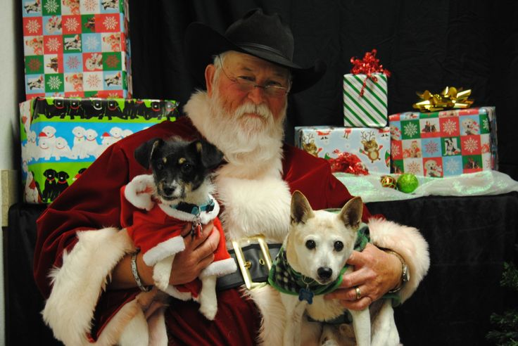 Black And White Toys For Tots : Best edible dog cards images on pinterest
