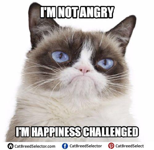 Grumpy Cat Memes | Cat Breed Selector