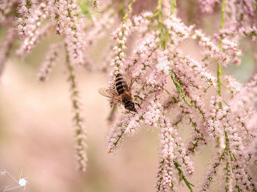 Bee | by Munns Foto