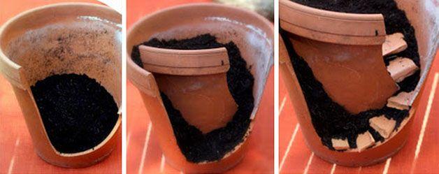 Suculentas em vasos quebrados                                                                                                                                                     Mais