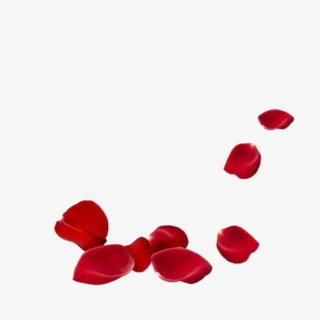 Krasnaya Roza Lepestki Roz Krasnye Drejfuyushie Lepestki Roz Krasnyj Lepestki Roz Png I Psd Fajl Png Dlya Besplatnoj Zagruzki Red And Pink Roses Pink Roses Background Flower Frame