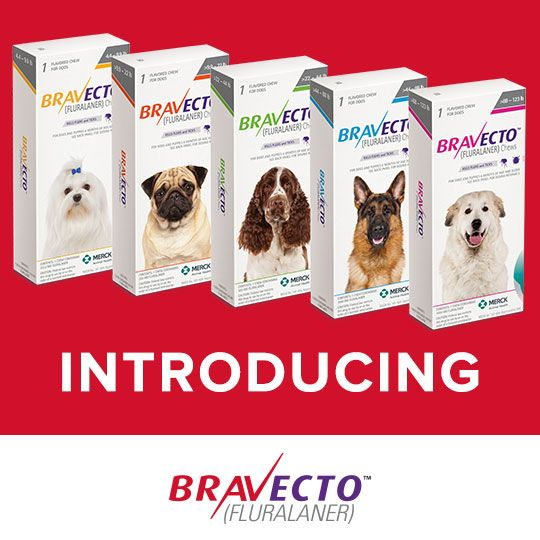 Introducing BRAVECTO (FLURALANER), an innovation in flea and tick protection! With just one BRAVECTO tasty chew, you can give your dog up to 12 weeks of flea and tick protection!* *BRAVECTO kills fleas, prevents flea infestations, and kills ticks (black-legged tick, American dog tick, and brown dog tick) for 12 weeks. BRAVECTO also kills lone star ticks for 8 weeks. Click to learn more: http://www.mypet.com/bravecto.aspx