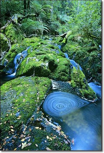 Barrington Tops National Park, NSW Jeremy Turner