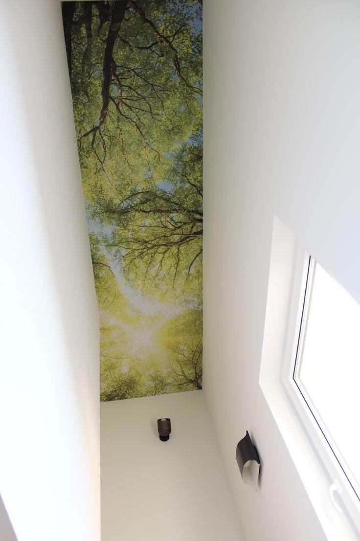 15 best ideas about fototapete wald on pinterest wald. Black Bedroom Furniture Sets. Home Design Ideas