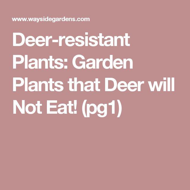 17 best images about deer resistant plants on pinterest