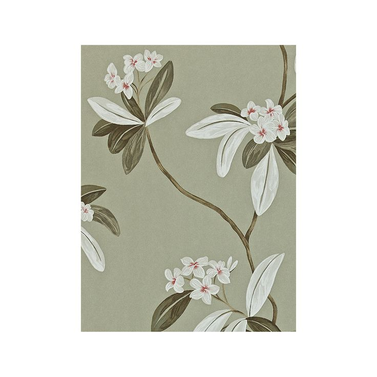 Buy Sanderson Oleander Wallpaper from our View all Wallpapers range at John Lewis. Free Delivery on orders over £50.
