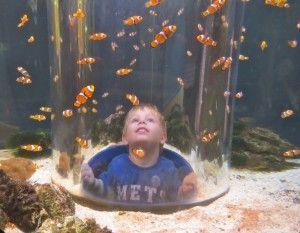 Reef HQ Aquarium in Townsville
